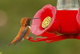 Hummingbird Sugar Water 101