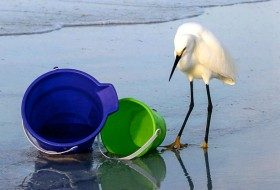 You Don't Say: Inquisitive Egret | Birds & Blooms