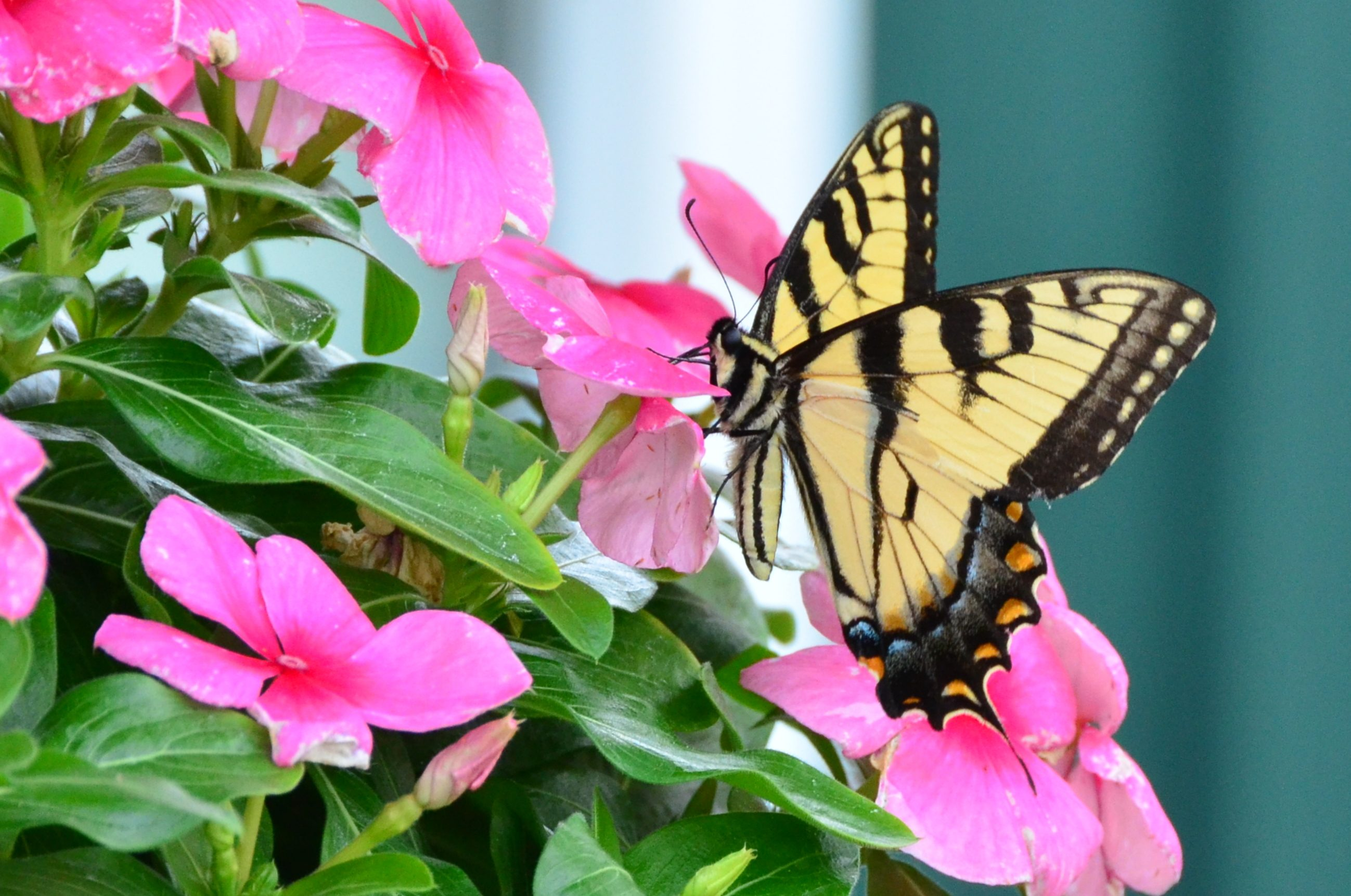 Flowers For Hanging Baskets That Attract Hummingbirds : Hanging flower basket butterfly birds and blooms