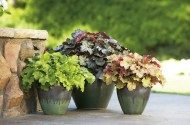 How to Revive Potted Plants