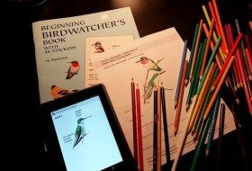 Rainy Day Birding Activities for Kids