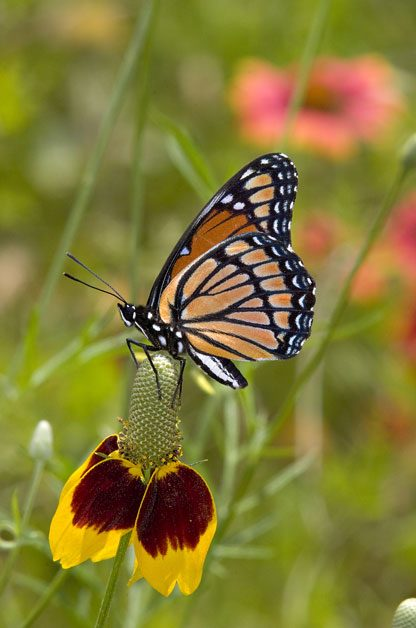 Bring on the Butterflies! | Birds & Blooms