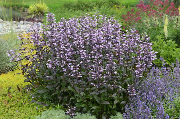 edging Plants for Three Seasons of Color | Birds & Blooms