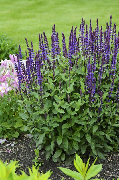 Top 10 Edge Plants for Three Seasons of Color | Birds & Blooms