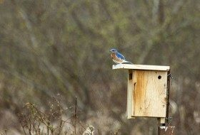 Reminders to Help Nesting Birds