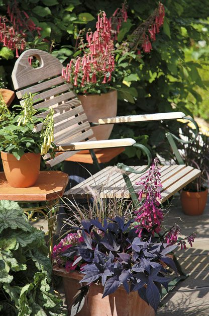Revive Potted Plants | Birds & Blooms