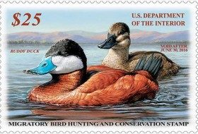 Help Save Duck Species with the Federal Duck Stamp