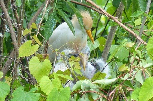 Bird Nesting Colony