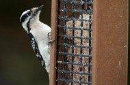 Tips for Successful Summer Bird Feeding