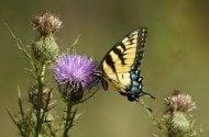 Enjoying Butterflies this Summer
