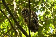 Birding in the Mountains of Honduras