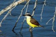 Join Me at the Rio Grande Valley Birding Festival