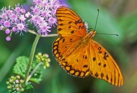 Types of Butterflies Worth Knowing