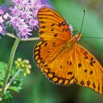 11 Kinds of Butterflies Worth Knowing