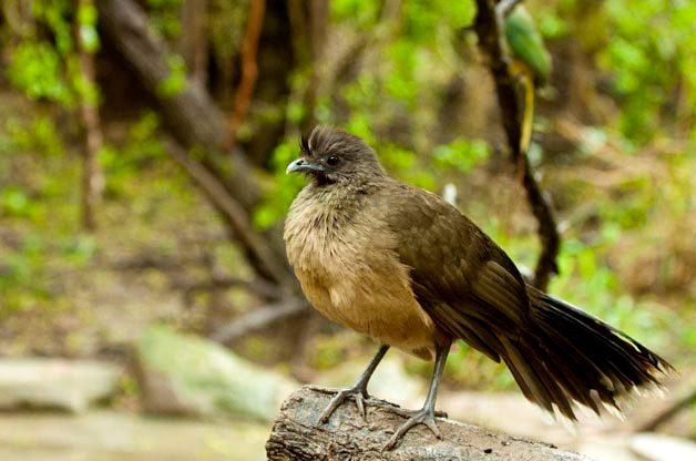 Rio Grande Valley Birding