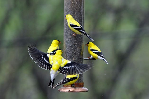 Feeders for All | Birds & Blooms Magazine