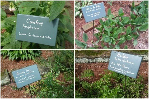 A Dye Garden from History