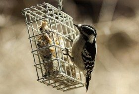 Tips for Fall Bird Feeder Maintenance