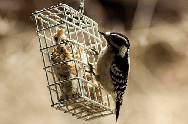 Tips for Fall Bird Feeder Maintenance