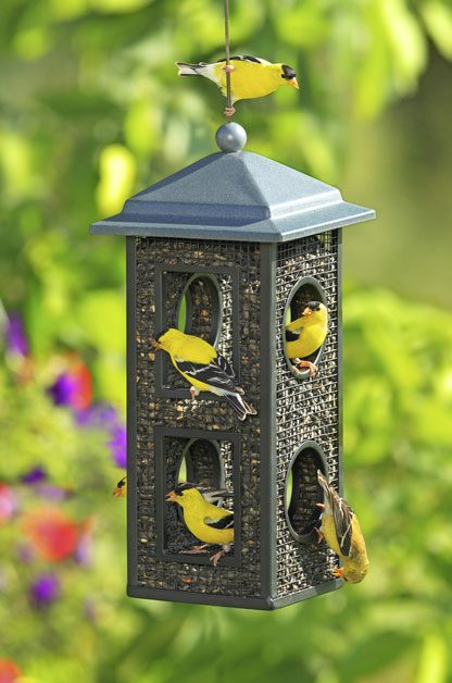 Bird Feeders for All | Birds & Blooms Magazine