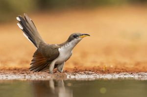 How to Identify Mystery Birds | Birds & Blooms Magazine