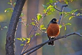 Bird Watching: Sunset Birds