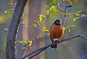 Bird Watching: Sunset Birds