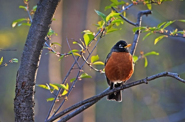 Bird Watching: Sunset Birds | Birds & Blooms Magazine