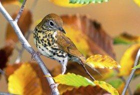 How to Identify Mystery Birds