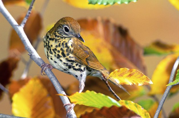 How to Identify Mystery Birds | Birds & Blooms Magazine