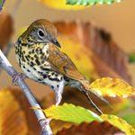 Birding Tips: How to Identify Mystery Birds