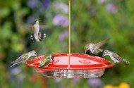 Bird Feeders For All