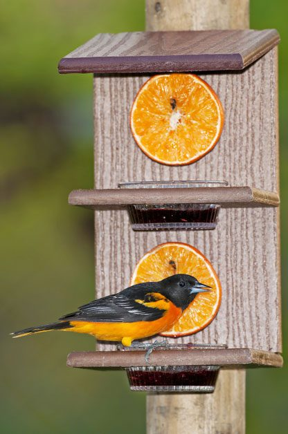 Bird Feeders for All | Birds & Blooms Magazine