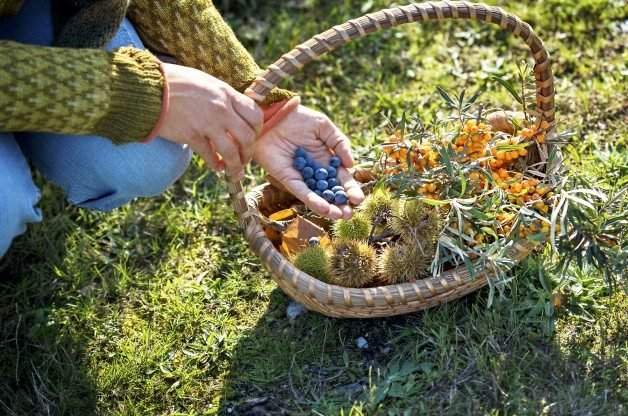 How to Forage For Food in the Wild | Birds & Blooms Magazine