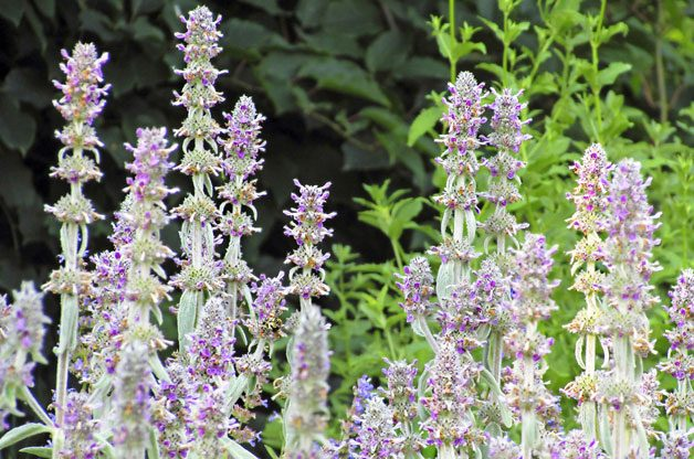 Easy Care Plants Anyone Can Grow | Birds & Blooms Magazine