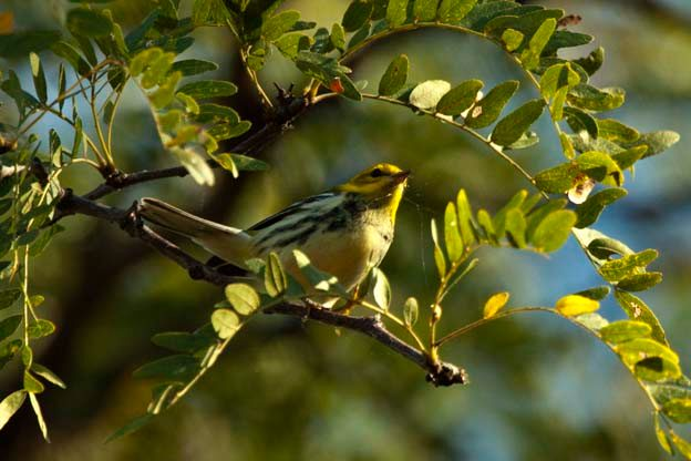 Birding Hotspots for Fall Migration
