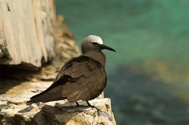 Birding Hotspots: Lesser-Known National Parks