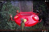 Hummingbird Feeder Cam