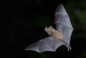 Top 5 Benefits of Bats