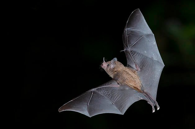 Top 5 Benefits of Bats