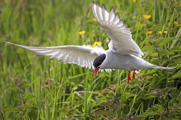 Bird Migration Secrets Revealed | Birds & Blooms Magazine