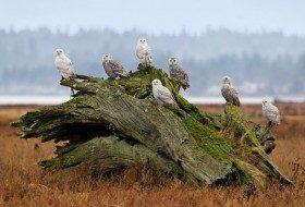 Bird Migration Secrets Revealed