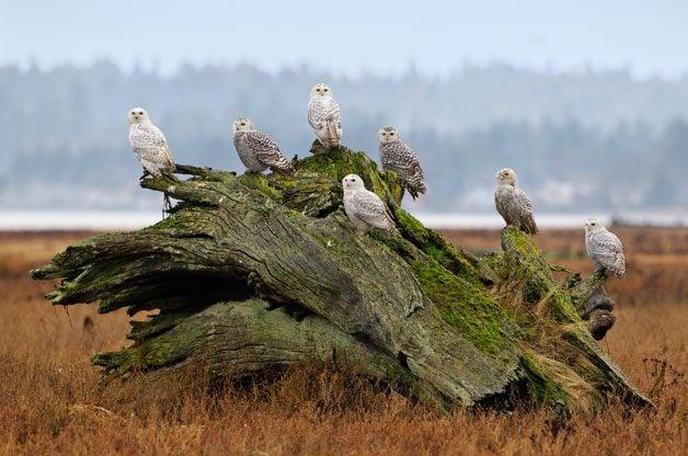 Bird Migration Secrets Revealed   Birds & Blooms Magazine