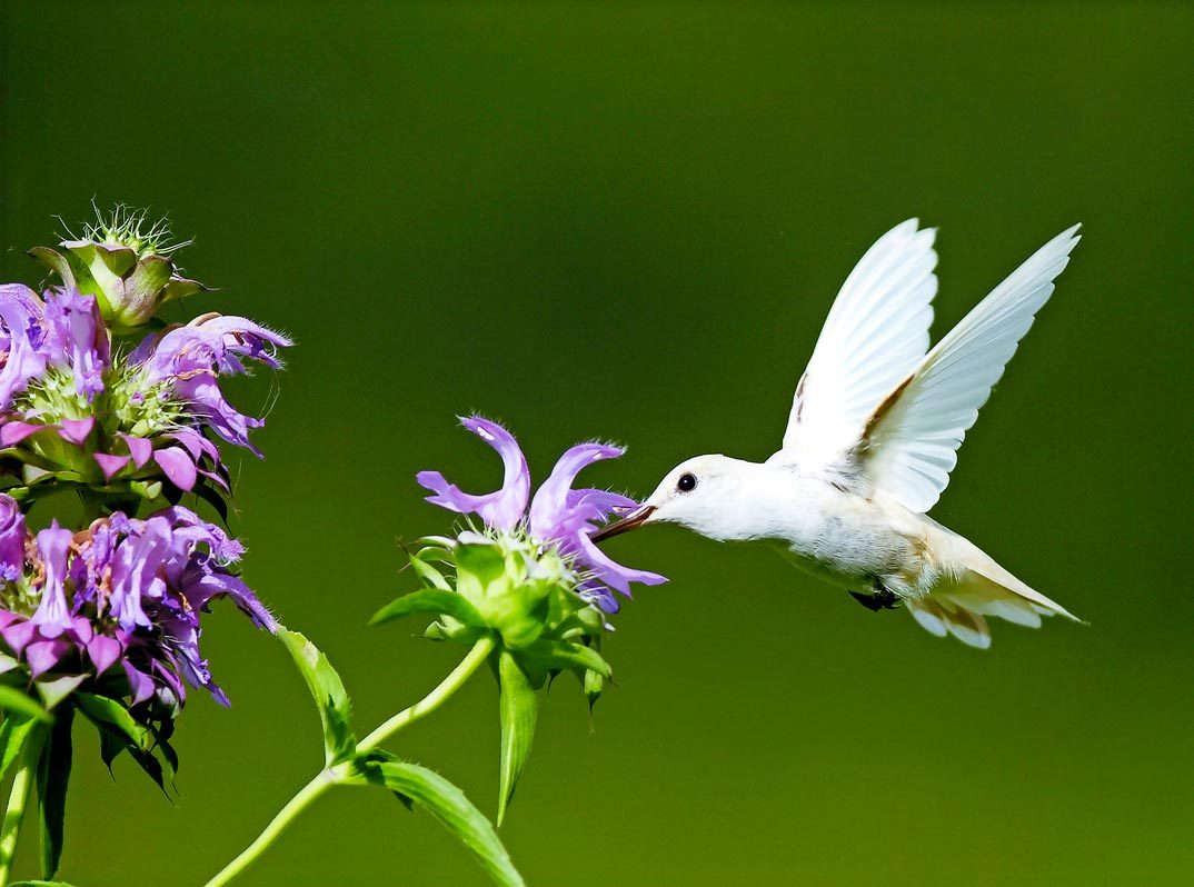 Birds And Blooms Extra Related Keywords & Suggestions - Birds And ...