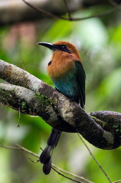 Birding Hotspots for Snowbirds