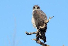 Top 5 Bird Species See in the Rio Grande Valley, Texas