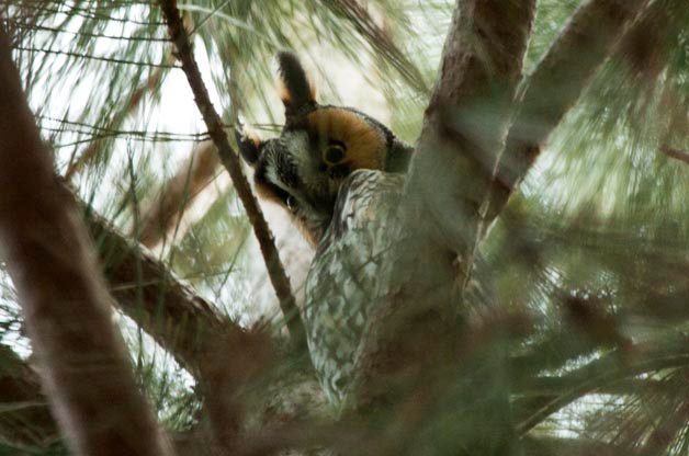 Be a Citizen Scientist: Participate in a Christmas Bird Count