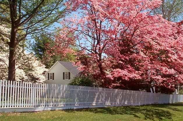 Flowering dogwoods and other trees require a pruning saw to manage branches that are too large for hand pruners or loppers.