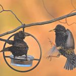 75+ Solutions for Common Backyard Birdwatching Problems