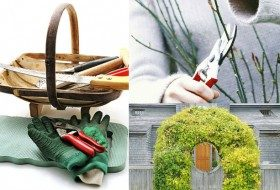 Become a Pruning Pro